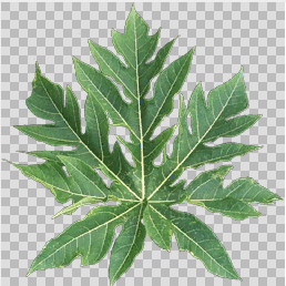 Leaf texture in DXT